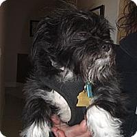 Adopt A Pet :: Maggie - Rescue, CA