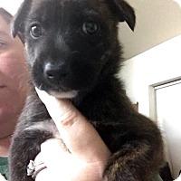 Adopt A Pet :: Daphne - Miami, FL