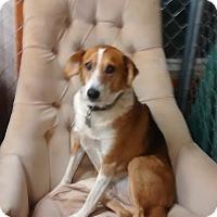 Adopt A Pet :: Kramer - richmond, VA
