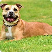 Adopt A Pet :: Matilda - Santa Monica, CA