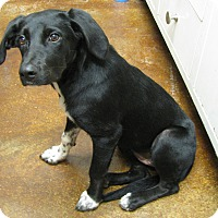 Adopt A Pet :: Lily Mae - Groton, MA