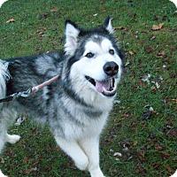 Adopt A Pet :: Zelda - Augusta County, VA