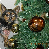 Adopt A Pet :: Minion - Sandusky, OH