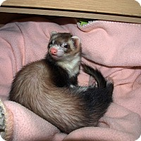Adopt A Pet :: Malina - Acworth, GA