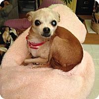 Chihuahua Mix Dog for adoption in Creston, California - Cece
