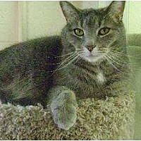 Adopt A Pet :: Sassy - Middletown, OH