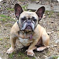 Adopt A Pet :: Fran - Westport, CT