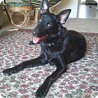 Adopt A Pet :: Magic aka Max, Zorro - Tucson, AZ