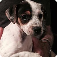 Adopt A Pet :: Coming soon! - Waldron, AR