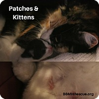 Adopt A Pet :: Patches - Temecula, CA