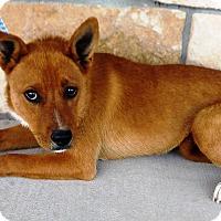 Adopt A Pet :: Jojo - Artesia, NM