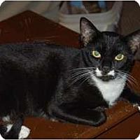 Adopt A Pet :: Madame Mim - Chula Vista, CA