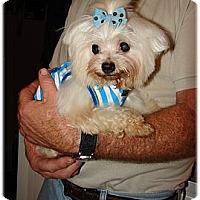 Adopt A Pet :: P.J. - Palm City, FL