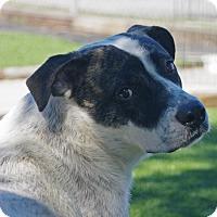 Adopt A Pet :: Bandit - Inverness, FL