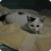Adopt A Pet :: Phillip - Rockaway, NJ