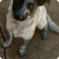 Adopt A Pet :: Cash - Cranford, NJ