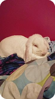 Lop-Eared Mix for adoption in Conshohocken, Pennsylvania - Stella and Precious