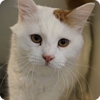 Adopt A Pet :: Georgie - Council Bluffs, IA