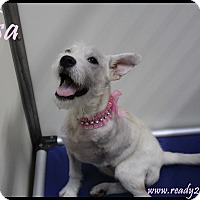 Adopt A Pet :: Elsa - Rockwall, TX