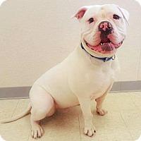 Adopt A Pet :: CARMINE - NYC, NY