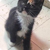Adopt A Pet :: Cerelia - River Edge, NJ
