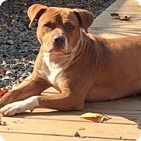 Adopt A Pet :: Fiona - Durham, NC