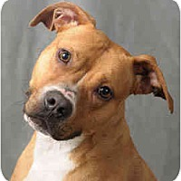 Adopt A Pet :: Daisy - Chicago, IL
