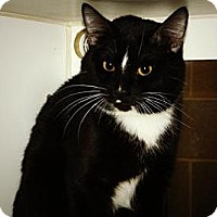 Adopt A Pet :: Boots - Cheyenne, WY