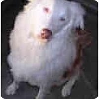 Adopt A Pet :: Emma (Maya) - Mesa, AZ