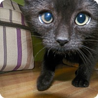 Adopt A Pet :: Emerson - Dover, OH