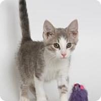 Adopt A Pet :: Abner (Let's Party!) - Arlington, VA
