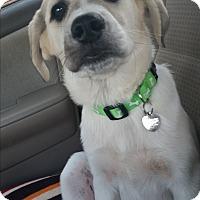 Adopt A Pet :: Luckie Lady - Huntsville, AL