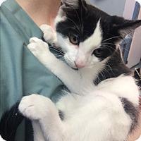 Adopt A Pet :: Casper - Richboro, PA