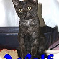 Adopt A Pet :: Wolf - Trevose, PA