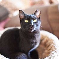 Adopt A Pet :: Lewis - Xenia, OH