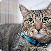 Adopt A Pet :: Tripoli - Santa Ana, CA
