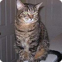 Adopt A Pet :: Molly - Merrifield, VA