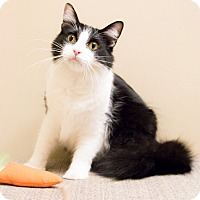 Adopt A Pet :: Merlin - Chicago, IL