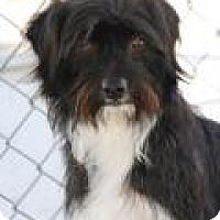Adopt A Pet :: Zoey - Yucaipa, CA
