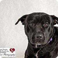 Adopt A Pet :: Jet - North Myrtle Beach, SC