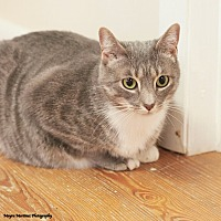 Adopt A Pet :: Boo - Huntsville, AL