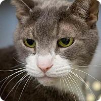 Adopt A Pet :: Parker 2 - Baltimore, MD
