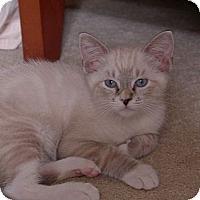 Adopt A Pet :: Prince - Lighthouse Point, FL