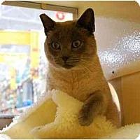 Adopt A Pet :: Squeaky - Modesto, CA
