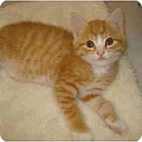 Adopt A Pet :: Strawberry - Richmond, VA