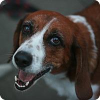 Adopt A Pet :: Sam - Canoga Park, CA