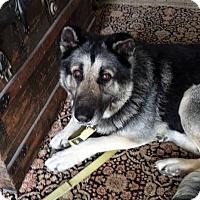 Adopt A Pet :: Blackie - Petaluma, CA