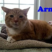 Adopt A Pet :: Arnie - East Stroudsburg, PA