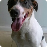 Pointer/Treeing Walker Coonhound Mix Dog for adoption in Abilene, Texas - Danny