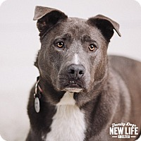 Adopt A Pet :: Sterling - Portland, OR